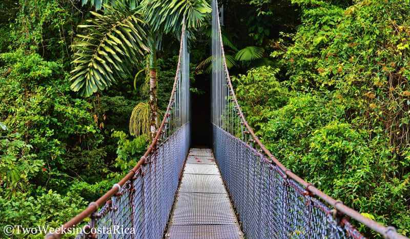 Hanging Bridge Cloud Forest Costa Rica Picture