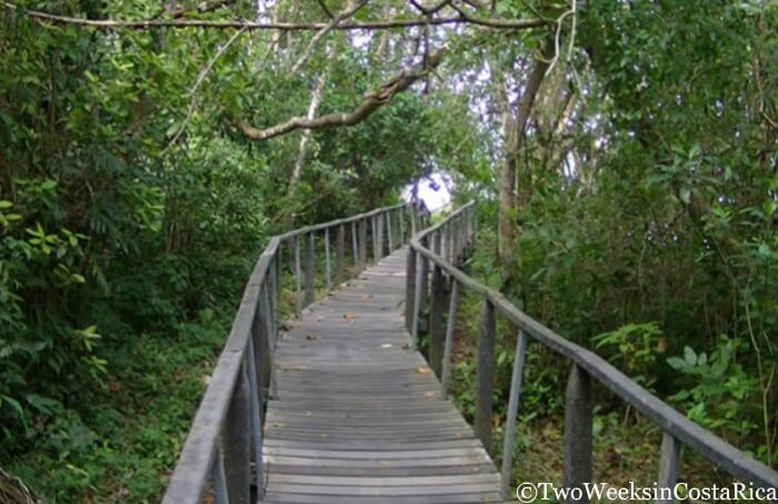 Footbridge at Cahuita National Park, Costa Rica