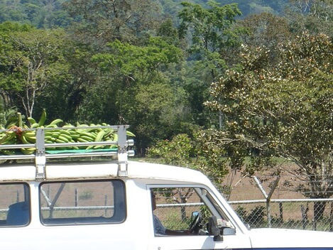 Bananas on top of a truck Costa Rica Picture