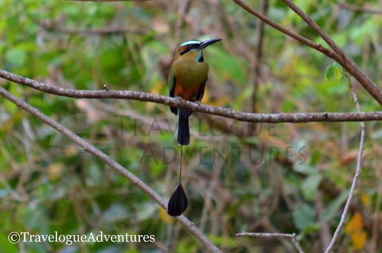 Diria National Park Birds