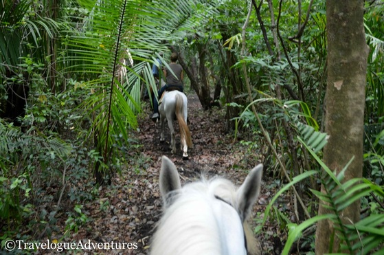 Horseback riding Jungle Nosara Costa Rica Picture