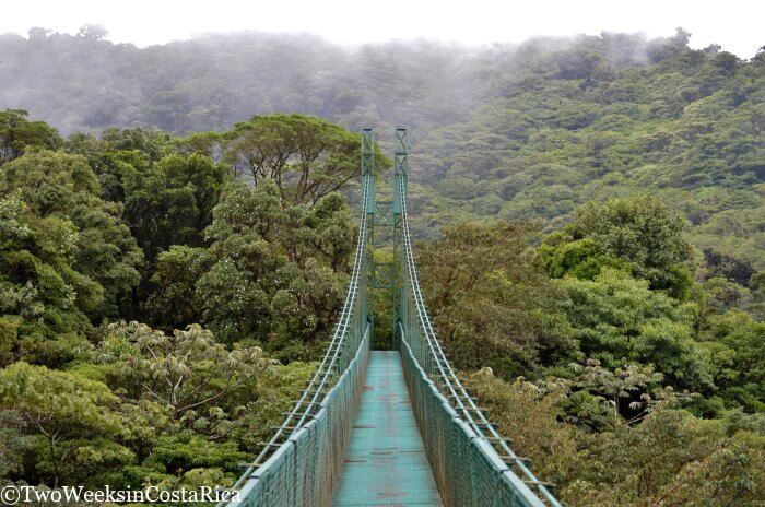 Monteverde: A Forest in the Clouds - Destination Guide