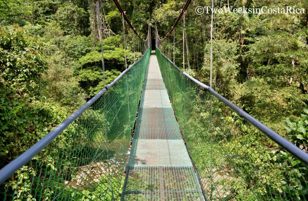 Hanging Bridge at Tirimbina