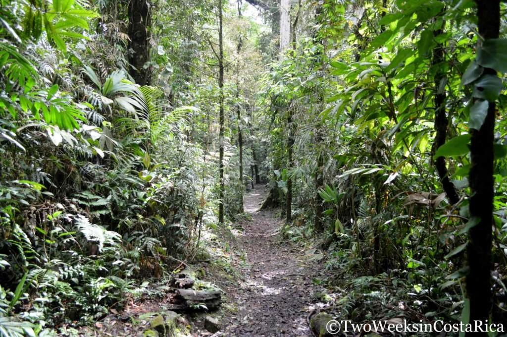 Trail Catarata del Toro