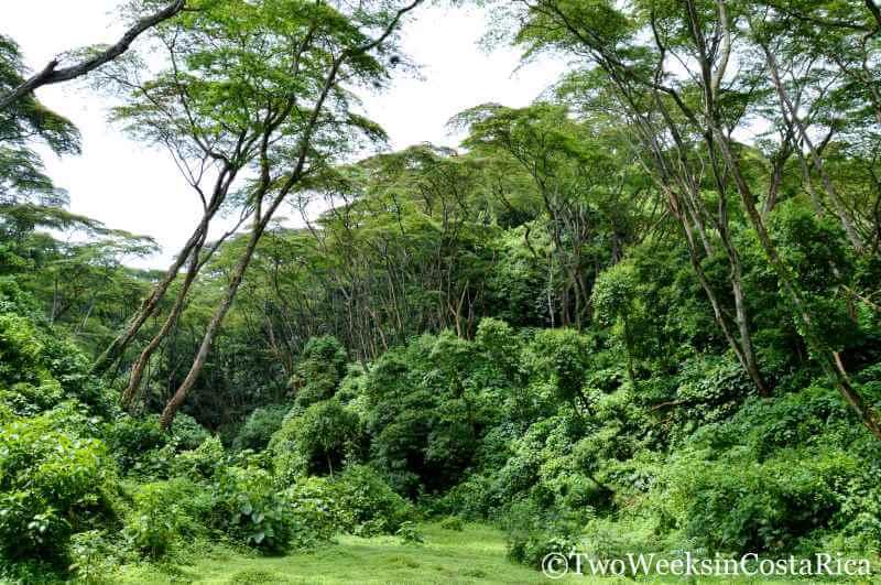 Lush Rainforest Around Grecia, Costa Rica | Two Weeks in Costa Rica