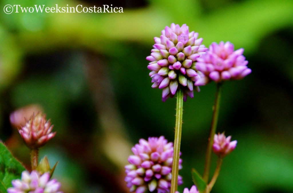 Macro Flower Shot | Two Weeks in Costa Rica