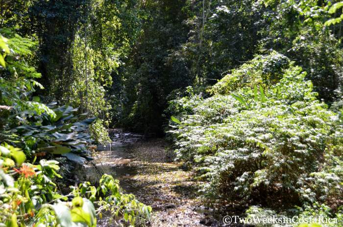 Carara National Park | Two Weeks in Costa Rica