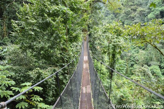 Hanging Bridge at Rainmaker Reserve | Two Weeks in Costa Rica
