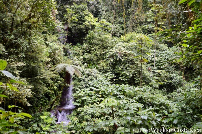 Thick Jungle at Rainmaker Reserve | Two Weeks in Costa Rica