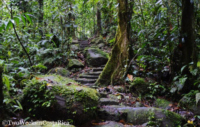 Hiking Trails Braulio Carrillo National Park | Two Weeks in Costa Rica