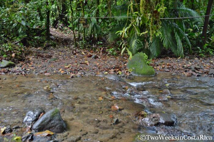 Stream Crossing at Braulio Carrillo National Park | Two Weeks in Costa Rica