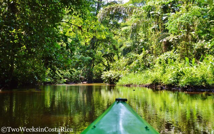 Canals of Tortuguero National Park   Two Weeks in Costa Rica