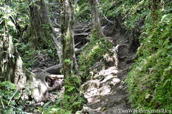 Hike to Cerro Chato | Two Weeks in Costa Rica