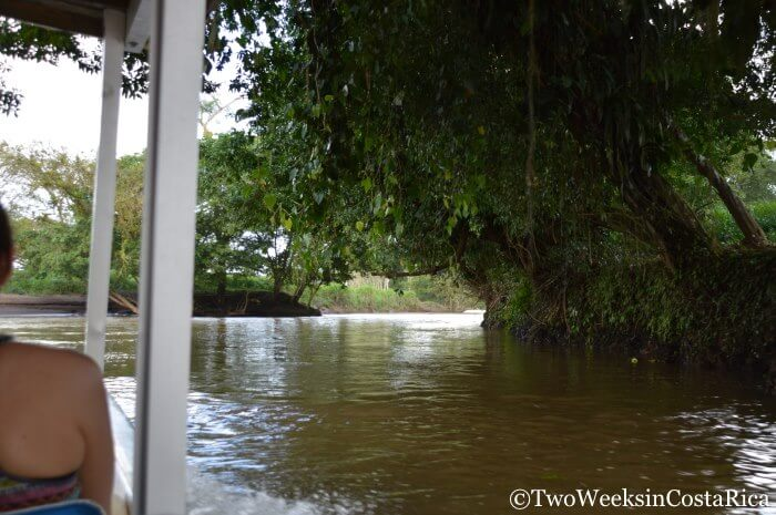 Views going to Tortuguero | Two Weeks in Costa Rica