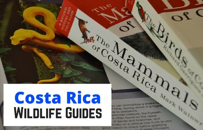 Best Costa Rica Wildlife Guides   Two Weeks in Costa Rica