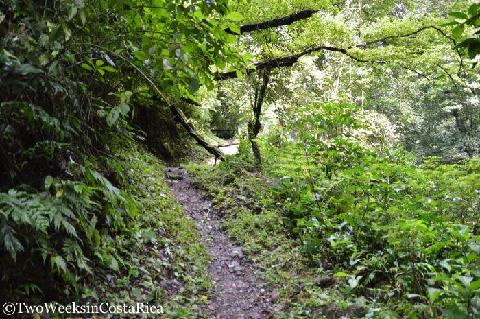 Trail to Los Chorros Waterfalls