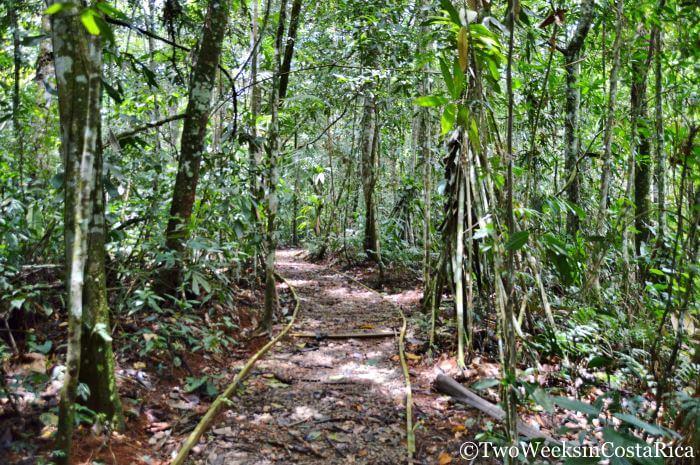 Los Cusingos Trails | Two Weeks in Costa Rica