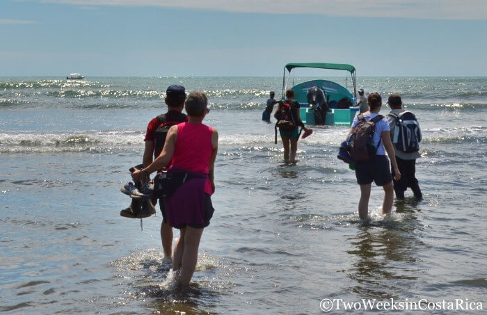 Spotting Costa Rica's Most Spectacular Wildlife at Sirena Ranger Station   Two Weeks in Costa Rica