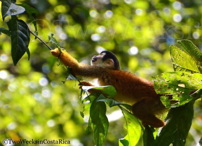 Spotting Costa Rica's Most Spectacular Wildlife at Sirena Ranger Station