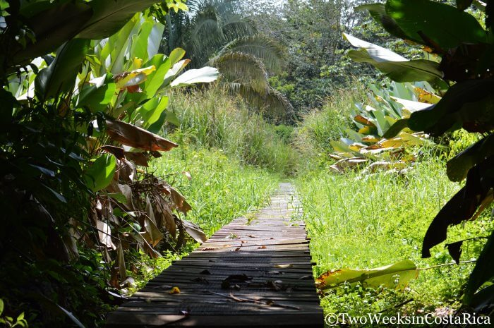 7 Things to do in Dominical | Two Weeks in Costa Rica