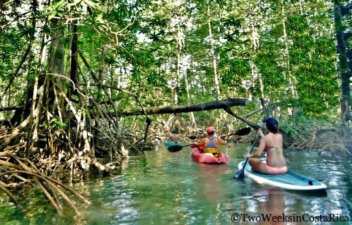 Kayaking in the Mangroves - 7 Things to Do in Dominical, Costa Rica