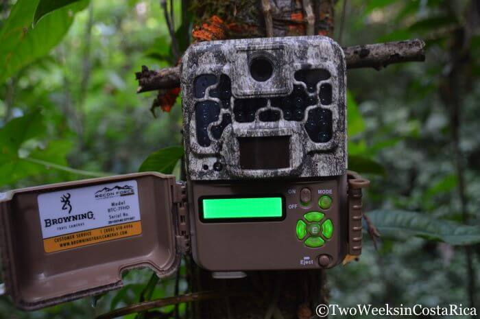 Spying on the Rainforest: Setting up Trail Cameras in Costa Rica | Two Weeks in Costa Rica