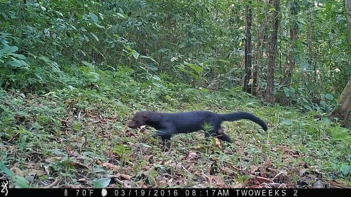 Using Trail Cameras in Costa Rica: The Tyra | Two Weeks in Costa Rica