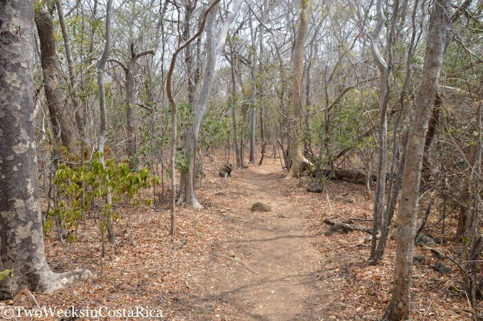Santa Rosa National Park - History and Hiking in Guanacaste