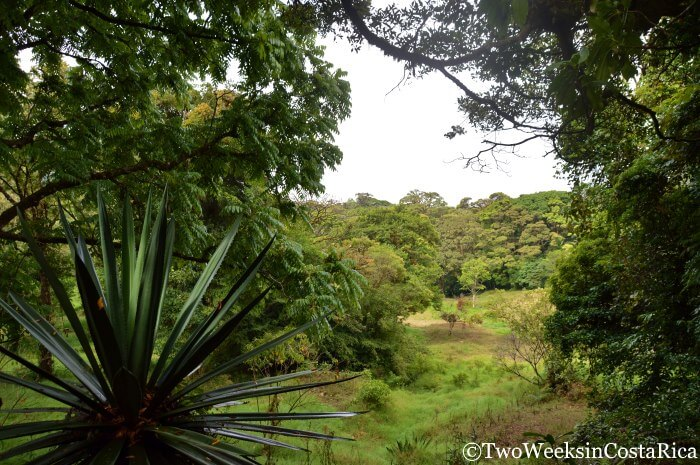 Curi Cancha Reserve - Avoiding the Crowds in Monteverde