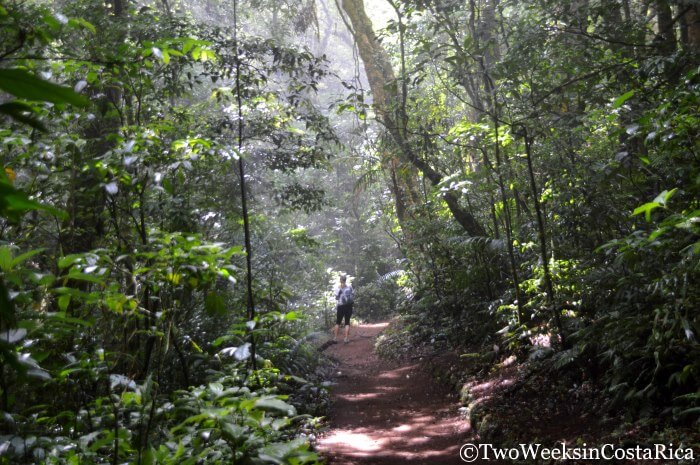Monteverde: A Forest in the Clouds - Hiking Curi Cancha Reserve