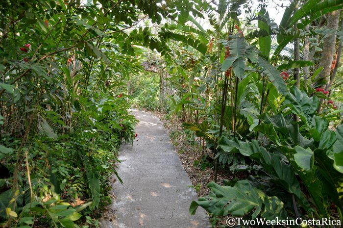 Costa Rica's Botanical Orchid Garden