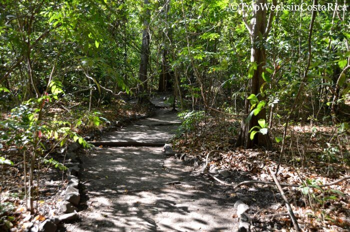 Lomas Barbudal Biological Reserve: An Oasis of Green in Guanacaste