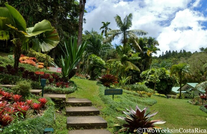 Wilson Botanical Garden in Costa Rica