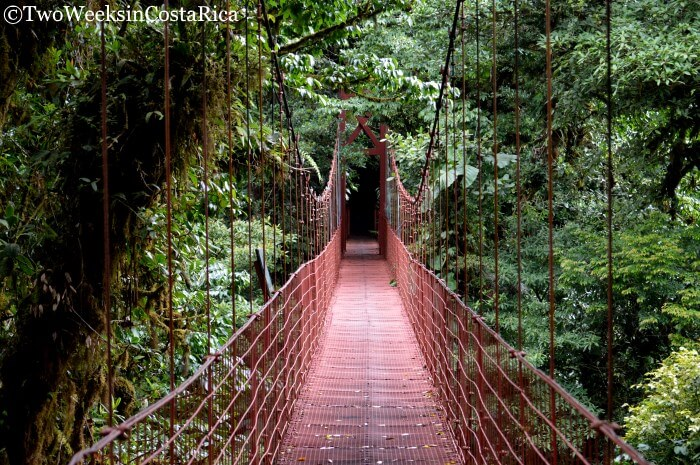 Hanging Bridge at Monteverde Cloud Forest Reserve