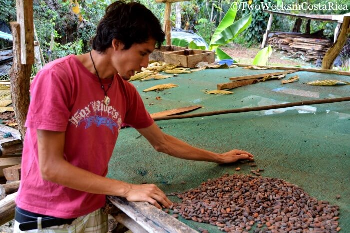 Why Costa Rica is the Perfect Destination Families - Chocolate Tour
