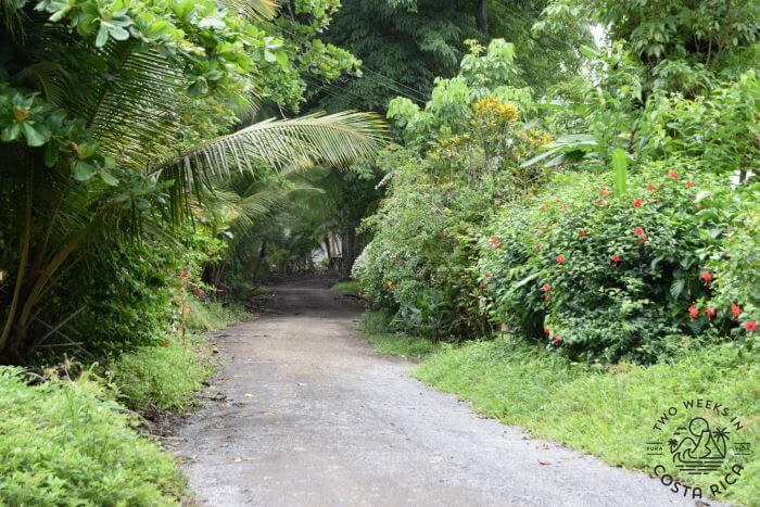 Beach Road Pavones