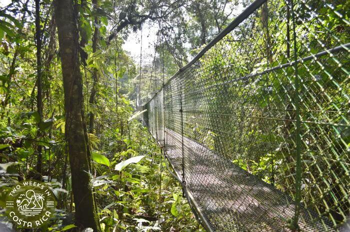 Hanging Bridge Puerto Viejo de Sarapiqui