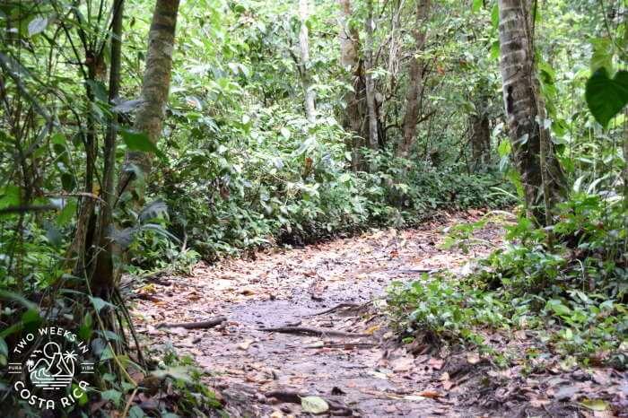 Trail Cahuita National Park