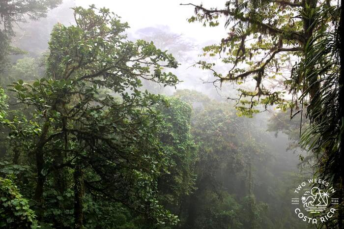 Cloud Forest Mist Monteverde