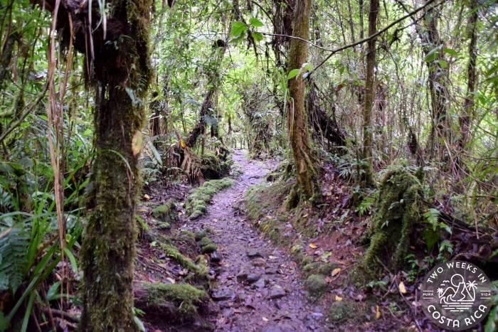 Oropendola Trail