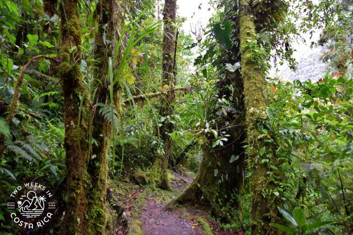 Rainforest Trail Tapanti National Park