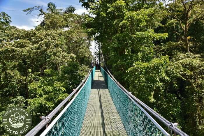 Sky Adventures Hanging Bridge Hike
