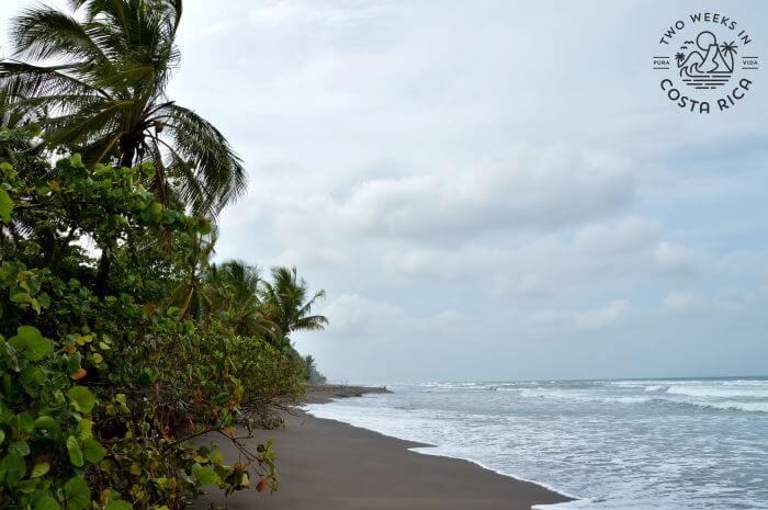 Beach Tortuguero