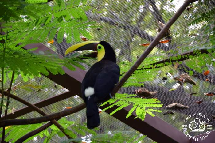 Toucan Diamante Wildlife Sanctuary
