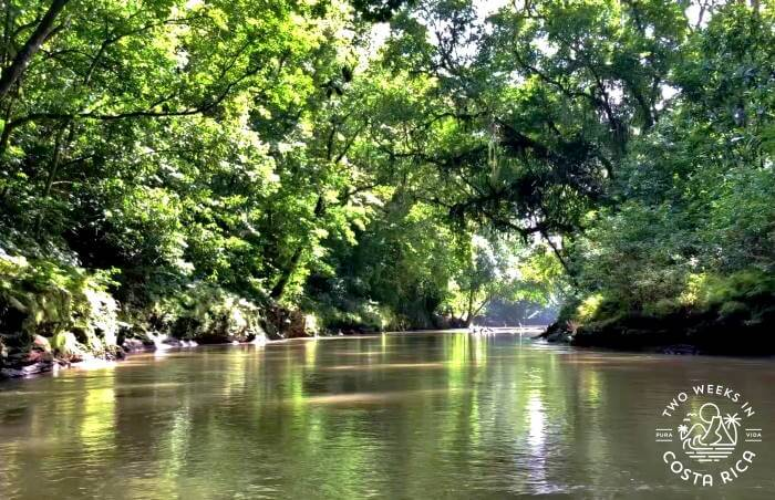 Tall trees and thick rainforest, river float tour