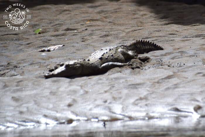 Crocodile river float tour Penas Blancas River