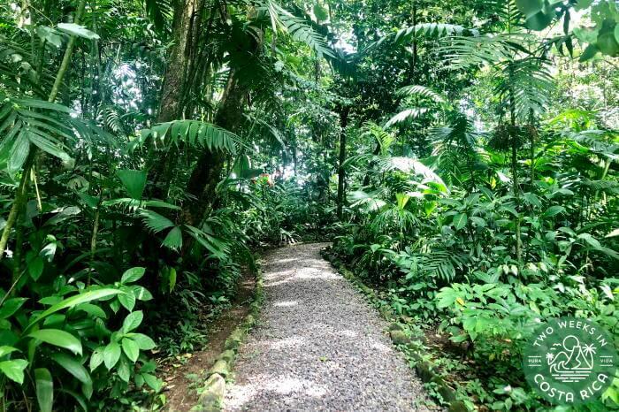 Trail Ecocentro Danaus