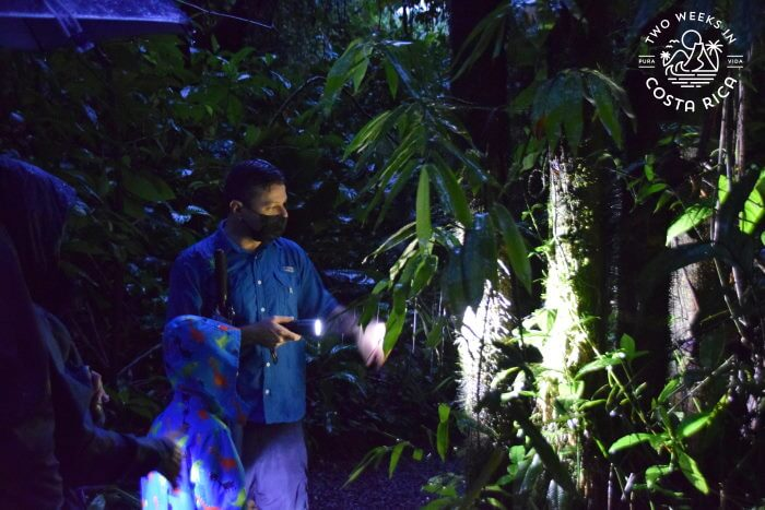 Guided Night Tour Arenal