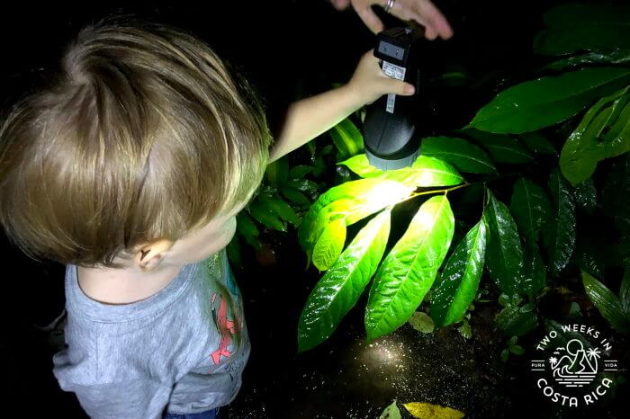 Night Tour with kids Arenal