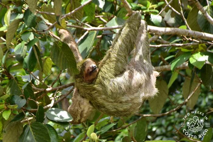 Sloth seen on river float tour